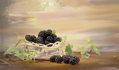 Autumn delights (Elisafox22 slowly catching up ;o)) Tags: elisafox22 sony nex6 lensbaby edge80 lens composerpro blackberries edge80optic brambles basket texture textures painting stilllife fruit berries collected ivy leaves elisaliddell©2017