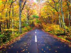 Autumn Road (moaan) Tags: towada aomori japan jp woods forest windingroad autumn fall autumncolors fallcolors nature naturephotograhy travel travelphotography travelogue iphone iphone5 iphonography utata 2017