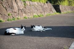 猫 (fumi*23) Tags: nex6 sony 50mm e50mmf18oss emount cat gato katze neko 猫 ソニー animal