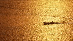 Come What May ... (Hazem Hafez) Tags: nile river water boat fishing fisherman sunset gold goldenhour sailing minimalism searching