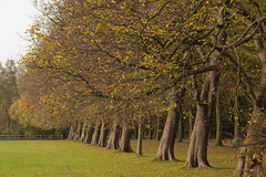 Herfst - Clingendael (Jan de Neijs Photography) Tags: clingendael sgravenhage denhaag bos forest herfst autumn landgoed landgoedclingendael natuur zuidholland holland nederland thenetherlands color nature trees blad bladeren southholland parkclingendael herfstkleuren bomen canonnl