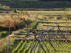 Late fall in rice fields (odeleapple) Tags: olympus e5 zuiko digital 70300mm zd rice field paddy fall