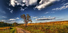 IMG_9101-02Ptzl1TBbLGER (ultravivid imaging) Tags: ultravividimaging ultra vivid imaging ultravivid colorful canon canon5dmk2 clouds fields farm path scenic rural vista evening autumn fall pennsylvania pa sky landscape lateafternoon autumncolors trees twilight road panoramic painterly