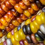 Multicolor maize thumbnail