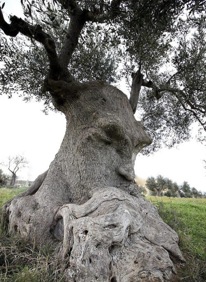 16 gương mặt ma quái tình cờ mọc trên những thân cây vô tri, vô giác - Ảnh 27.