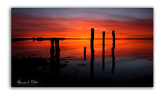 On This Morning (RonnieLMills) Tags: rough island islandhill sunrise early morning dawn intense colours rotten wooden posts jetty strangford lough comber newtownards county down northern ireland greatphotographers