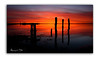 On This Morning (RonnieLMills 5 Million Views. Thank You All :)) Tags: rough island islandhill sunrise early morning dawn intense colours rotten wooden posts jetty strangford lough comber newtownards county down northern ireland greatphotographers greaterphotographers greatestphotographers