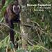 Brown Capuchin, Cebus apella