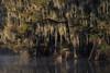 Cajun Twist (jojo (imagesofdream)) Tags: bayou southern state