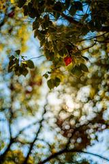 ILCE-7M2-01858-20171031-1428-HDR // Olympus F.Zuiko Auto-S 50mm 1:1.8 (Otattemita) Tags: 50mmf18 fzuiko florafauna omsystem olympus olympusfzuikoautos50mmf18 zuiko fauna flora flower nature plant wildlife olympusfzuikoautos50mm118 sony sonyilce7m2 ilce7m2 50mm cnaturalbnatural ota