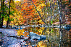 Peak Fall Foliage at the Black River, New Jersey (George Oze) Tags: kenlockwoodgorge autumn colorful creek daytime deciduous fall foligae forested forestland horizontal hunterdoncounty landscape lowangleview nature newjersey nopeople nobody northamerica outdoors picturesque quiet reflections relaxing river rocky rockycreek scenic seasons serene splendid tranquil travel trees usa vivid water wood highbridge unitedstatesofamerica us rock grass forest