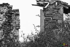 L-A-LUR_1784 (OrNeSsInA) Tags: trasimeno natura byrd airon ornessina