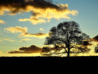 A lone tree at the moment of sunset behind it