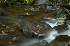 der Herbst geht (lebastian) Tags: panasonic dmcfz1000 longexposure langzeitbelichtung sächsischeschweiz river ndfilter nd64