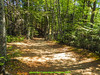 abetone bosco (giordano torretta alias giokappadue) Tags: abetone bosco verde