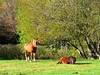 HOURSE GEGE AND HIS FRIEND (loriscresti) Tags: hourse cavallo natura verde animali animals green montefumaiolo