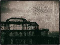 290.2 Murmuration (Dominic@Caterham) Tags: pier ruins sea birds old mono sky murmuration