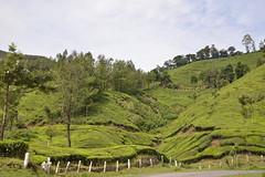 (Richard Langham) Tags: india classic car ambassador tour southern kerala tea plantation kerela tamil nadu