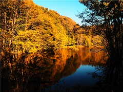 Autumn at the pond (Ostseetroll) Tags: geo:lat=5403005980 geo:lon=1070576364 geotagged scharbeutz klingberg herbst autumn bäume trees wasser water teich pond spiegelungen reflections autumncolours herbstfarben