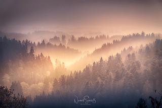 Evening sun and mist ... Bavarian Forest