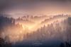 """Evening sun and mist ... Bavarian Forest (nigel_xf) Tags: gutfeuerschwendt """"bavarian forest"""" """"bayrischer wald"""" niederbayern sunset sonnenuntergang mist fog nebel sun sonne abendsonne deutschland germany bayern bavaria """"ferien mit hund"""" """"holiday with dog"""" nikon d750 nigel nigelxf vsfototeam forest wald bäume trees tannen herbst autumn herbstfarben """"autumn colors"""" landschaft landscape berge hügel hills mountains """"neukirchen vorm"""