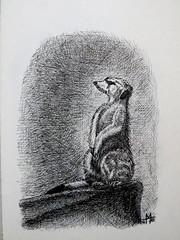 Meerkat 2001 (Mattijsje) Tags: drawing penandink meerkat stokstaartje zoo tekening oostindische inkt kroontjespen nis dierentuin dier beest animal drawn drawtheline stokstaart tekenen getekend penink art dutch nederlands holland
