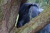Hide and Seek (Johan Moerbeek) Tags: hide horse paard boom verschuilen heemskerk duinen ngc