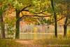 Color Tour ... tree framed trees (Ken Scott) Tags: shelllake leelanau michigan usa 2017 october autumn fall colortour 45thparallel hdr kenscott kenscottphotography kenscottphotographycom freshwater greatlakes lakemichigan sbdnl sleepingbeardunenationallakeshore voted mostbeautifulplaceinamerica