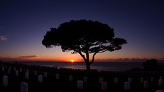 Lone Torrey Pine at Sunset. (isaacullah) Tags: tree sunset sky cemetery silhouette light sea pacific california coast