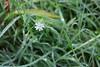 rugiada (Franceskave) Tags: rugiada fiore prato flower dew