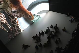 Giraffes at Deep Space 8K