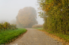 On a foggy autumn morning. (andreasheinrich) Tags: landscape path tree fog morning autumn october foggy sunny colorful germany badenwürttemberg neckarsulm dahenfeld deutschland landschaft weg baum nebel morgen herbst oktober neblig sonnig farbenfroh nikond7000