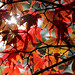 """Westonbirt Arboretum • <a style=""""font-size:0.8em;"""" href=""""http://www.flickr.com/photos/84132664@N06/26389849239/"""" target=""""_blank"""">View on Flickr</a>"""