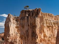 Trees on the Edge (Ramona H) Tags: bryce brycecanyon brycecanyonnationalpark hodoos canyon erosion fin freshwaterlimestone limestone nationalpark rim rock tree trees