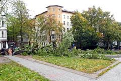 """Sturmschäden durch """"Xavier"""" (Miwedi) Tags: 2017 baum berlin kreuzberg sturmtief xavier deutschland sturmschäden umgestürzt böckhstrase grimmstrase eiche stormdamages"""