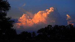 Sunset Storm Clouds (Jim Mullhaupt) Tags: sunset sundown dusk sun evening endofday sky clouds color red gold orange pink yellow blue tree palm outdoor silhouette weather tropical exotic wallpaper landscape nikon coolpix p900 bradenton florida manateecounty jimmullhaupt cloudsstormssunsetssunrises storm thunder wind rain weatherphotography photo flickr geographic picture pictures camera snapshot photography nikoncoolpixp900 nikonp900 coolpixp900