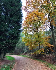 Autumn (Marc Sayce) Tags: colours fall leaves autumn october 2017 alice holt forest hampshire wrecclesham farnham surrey south downs national park