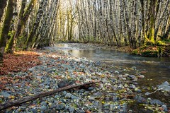 Fall Day (photobydave@gmail.com) Tags: suttoncreek fall vancouverisland britishcolumbia pacificnorthwest creek forest landscape water