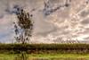 DSC_0008 - Ripples in the sky (SWJuk) Tags: swjuk uk unitedkingdom gb britain england lancashire burnley home canal leedsliverpoolcanal water calm flat still reflections trees clouds bluesky sun sunlight towpath inverted flipped grass 2017 oct2017 autumn autumnal nikon d7100 nikond7100 18300mm rawnef lightroomcc ripples
