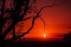Sequia _XT29313 (Alberto Estella) Tags: nube libre aire mirador paisaje tripode color temperatura arbol rojo cielo exposicion larga star árbol planta hierba estella mar azul costa brava torres agua arena sedosa roca nubes formación rocosa puesta sol fujifilm xt2 bosque senda de campo anochecer avión