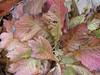 Autumn leaves (Artybee) Tags: blair castle caravan park atholl clan murray glen garry scottish highlands victoria tv series autumn leaves colours