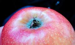 Macrapple. 20/365 (josemig78) Tags: apple macro mobile mobilephoto 365days
