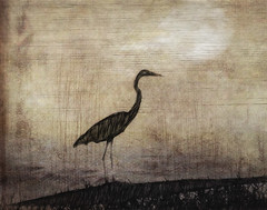 Silhouette (David DeCamp) Tags: bird animal nature wildlife illustration texture