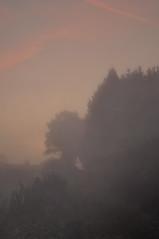 Sound of Silence (Uli He - Fotofee) Tags: ulrike ulrikehe uli ulihe ulrikehergert hergert nikon nikond90 fotofee plätzer burghaun nebel morgen morgenlicht