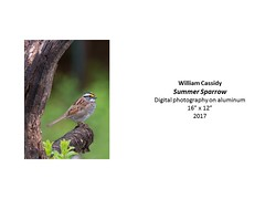 """Summer Sparrow • <a style=""""font-size:0.8em;"""" href=""""https://www.flickr.com/photos/124378531@N04/37106284903/"""" target=""""_blank"""">View on Flickr</a>"""