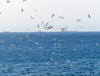 Seagulls! (Toni Kaarttinen) Tags: greece griechenland grecia grèce grécia ελλάδα elláda ἑλλάσ hellás rhodes rodos rhodos rodi rodes rodas ρόδοσ ródos dodecanese island greek rhodescity city holiday vacation summer summerholiday greekisland seagulls sea