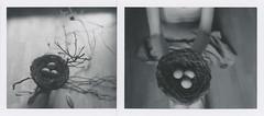 Nest (l'imagerie poétique) Tags: limageriepoétique poeticimagery nest mywildnature manaturesauvage book series conceptualart selfportraits diptych