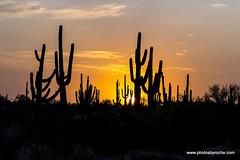 Desert sunrise (doveoggi) Tags: 8716 arizona mcdowellsonoranpreserve scottsdale desert sunrise saguaro cactus