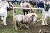 Ballinasloe Horse Fair (Clem Mason) Tags: horse fair festival ballinasloe galway animal 2017 october clemmason canon