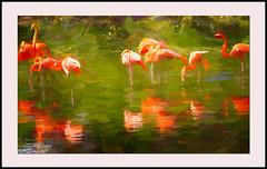 Flamingos (billackerman1) Tags: flamingos birds painting impressionism art awardtree
